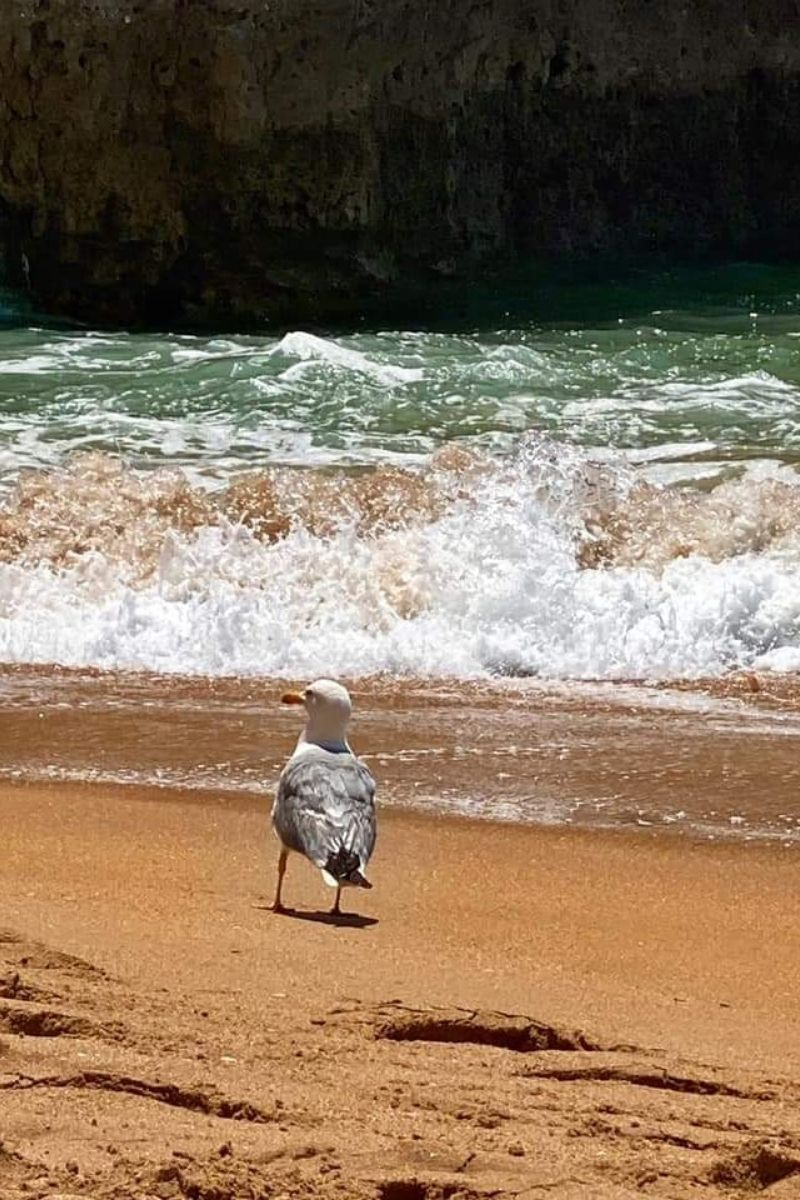 Noclegi u Polaków w Portugalii - polski nocleg blisko plaży